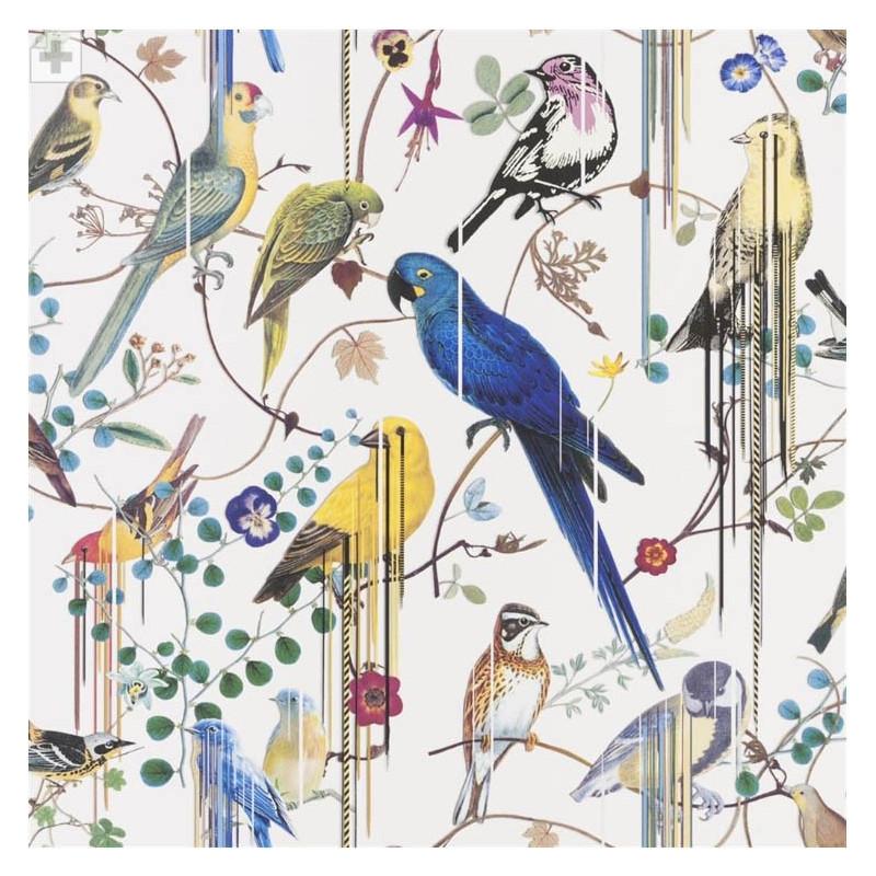 Birds Sinfonia Perce Niege