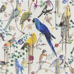 Birds Sinfonia Jonc