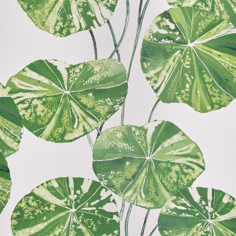 Brahmi - Leaf